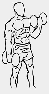 Bicep Curl Cartoon Instruction (Page 1) - Line.17QQ.com